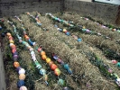 Osterbaumaktion 2012